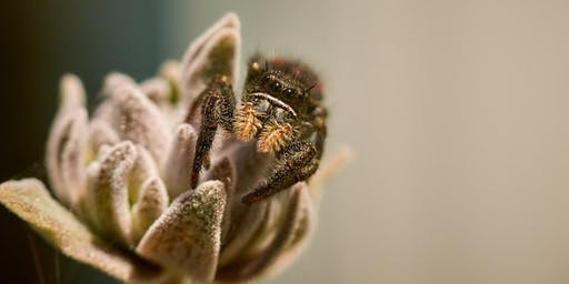 Preserve Open - Today's Theme: Spiders With Gwen Heistand