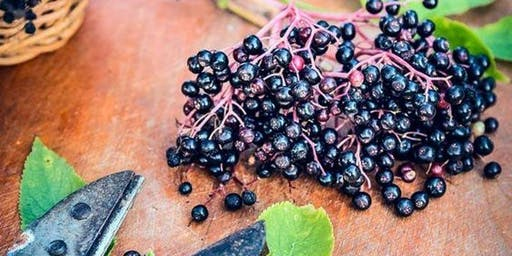 2019 wild food foraging walk