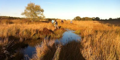 Wetland Conservation for Dragonflies