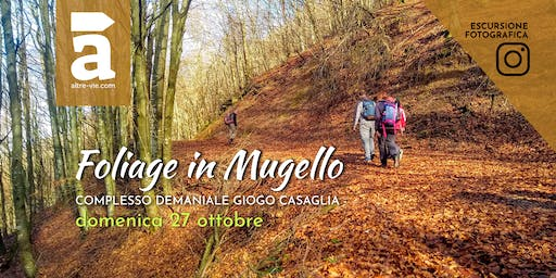 Foliage in Mugello