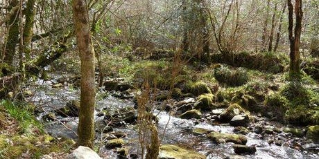 Foraging Walk @ Carey's Castle with Andrew Malcolm tickets