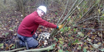 Coppicing course with conservation specialists TCV