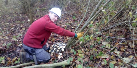 Coppicing course with conservation specialists TCV tickets