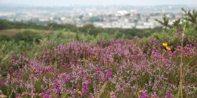 Help the Heather on Kincorth Hill