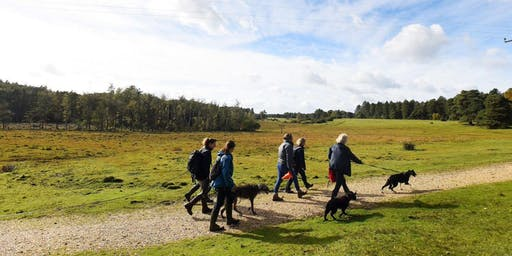 New Forest Walking Festival 2019: Bark Ranger Walk