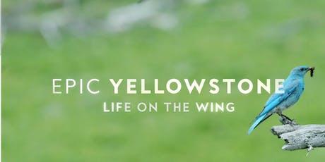 """Entrada al documental """"Yellowstone épico–Vida en las alas"""". Pajareros 2019. entradas"""