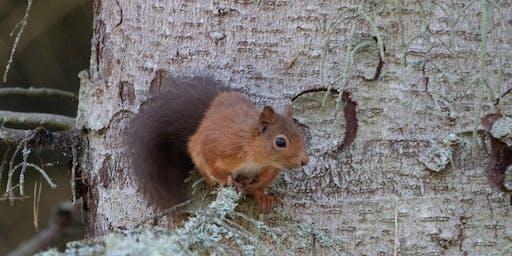 Squirrel Spotting Safari & Squirrel Woodland Management