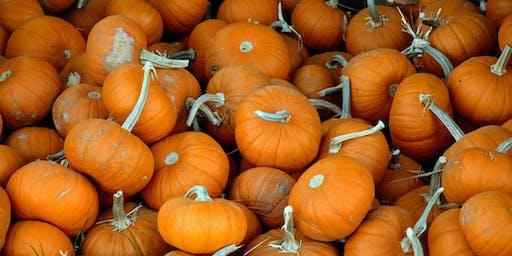 Lil' Pumpkin Dash