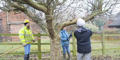 Fruit tree pruning course