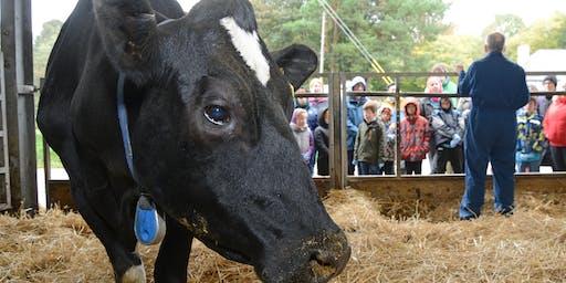 Meet the Cows