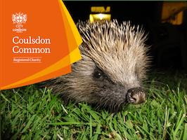 Build a Hedgehog Home