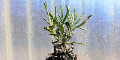 Plant Propagation via Cuttings Workshop Sept 22