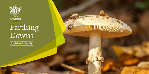 Fungal Foray - Farthing Downs and New Hill