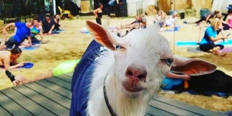 Light Up Night Goat Yoga @ THE GROVE! tickets