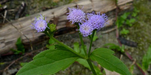Invasive Plant Field Workshop: The Good, The Bad, & The Pretty Ugly