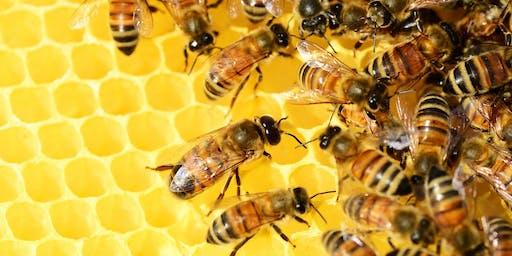 Hive Alive: The Amazing Honey Bee