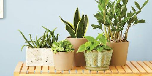 House Plants for Function & Color - UGA DeKalb
