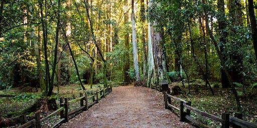 Guided Forest Bathing in Chesapeake Arboretum - Hampton Roads