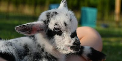 Fun on the Farm w/Baby Goat Yoga, Bottle Feeding, Snuggles!