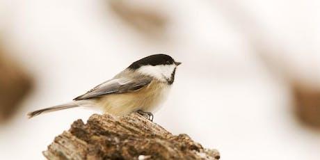 The Big Sit 2019 (Birding Event) tickets