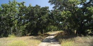 Hike the Arroyo Trabuco (O'Neill Park)