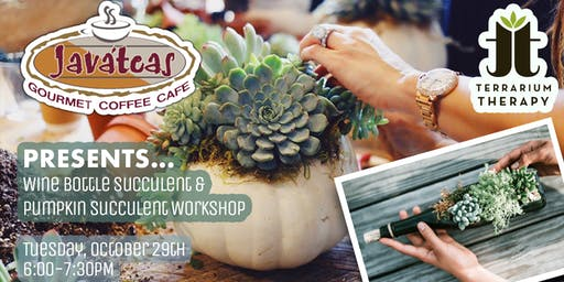 Pumpkin Succulent Workshop and Wine Bottle Planter at Javateas