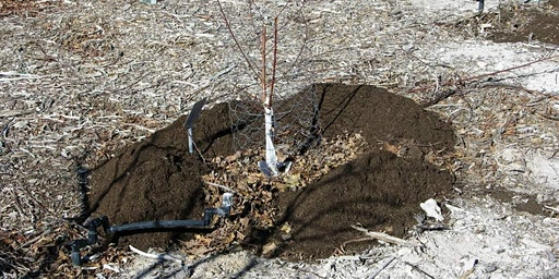 How to Fertilize Fruit Trees