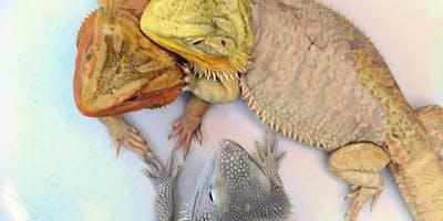 Show Me Reptile & Exotics Show (Springfield)