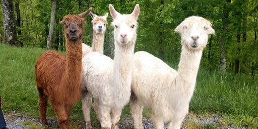 Thanksgiving Day: Thursday, November 28th, 2019 Alpaca Farm Visit