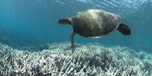 Water Quality and the Great Barrier Reef Forum