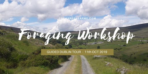 Guided Foraging Workshop Wicklow