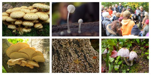 Fungi Foray in the Sheffield General Cemetery - Friday 1st November