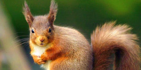 Red Squirrel Workshop South Lakes tickets