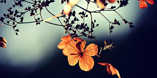 Autumn Equinox Yoga and Intention Setting
