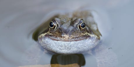 Improve your Pond for Wildlife tickets