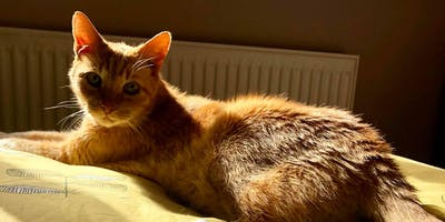 Your Cat's Golden Years - caring for your senior 'catizen'