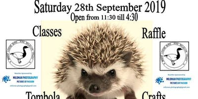 Chichester African Pygmy Hedgehog Show
