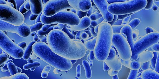 Microbiota Intestinale e Benessere