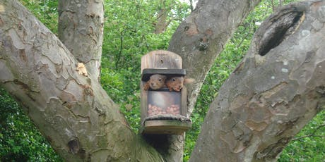 Red Squirrel Workshop - North Lakes tickets