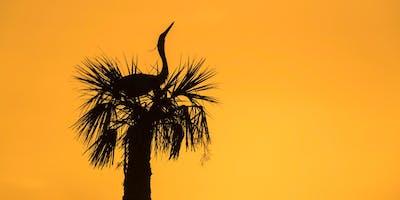 Hunt's Photo Adventure: Birding Along the Space Coast