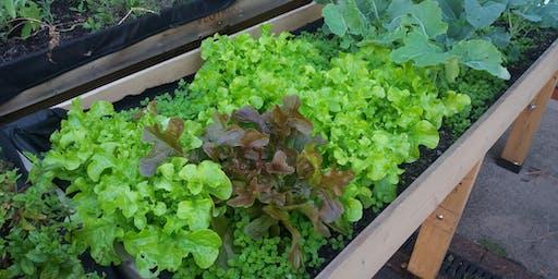 School Food Growing & Gardening Workshops for Teachers