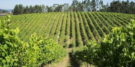 Curso de Vinho - O que realmente sabes sobre os Vinhos Verdes? bilhetes