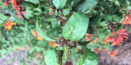 CEU Class for License Renewal - Landscape Pest Management