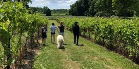 Vineyard and Winery Tour + Barrel Tasting with Shelby Township Gardeners Club