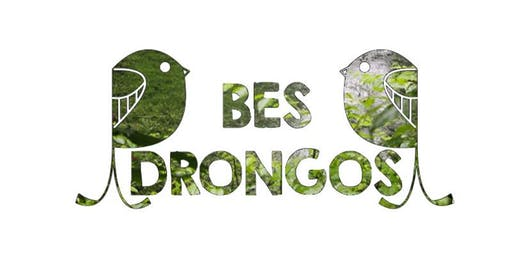 The Tale of Our Forests - 22 SEPT 2019 BES Drongos Petai Trail Walk (AM)
