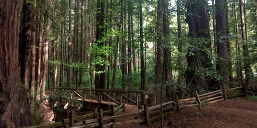 4 Night Redwood Forest Therapy Retreat with Grey Owl Hollow