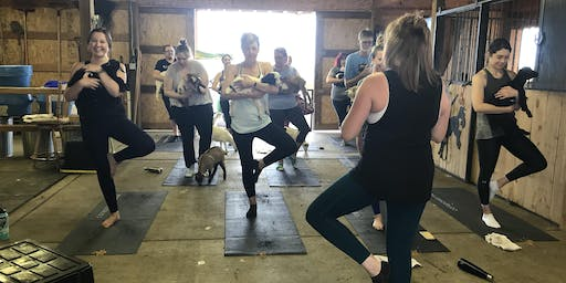 Fainting Goat Yoga - End of Season Party
