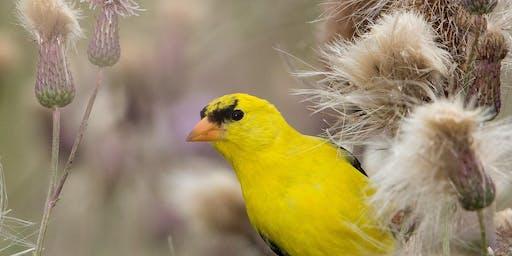 Coney Island Bird Walks