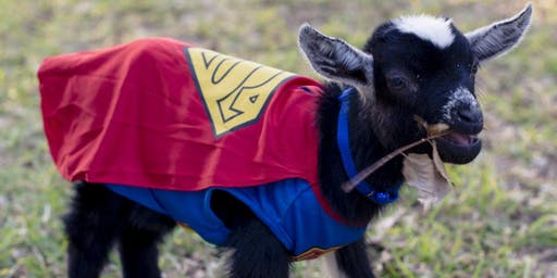 Goat Yoga: Halloween Party Edition at Faith Lutheran Church