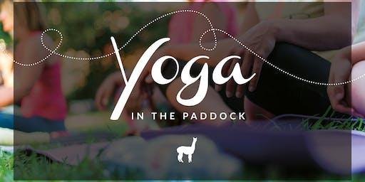 Yoga in the Paddock